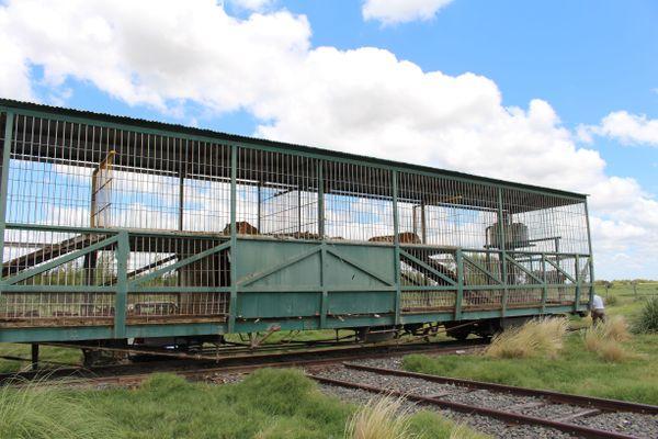 4 tigres abandonnés dans un wagon en Argentine