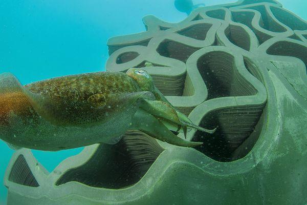 En juin 2019, des récifs artificiels ont été immergés en mer à la limite de la bande des 300 mètres des plages agathoises. Ils ont vite été colonisés par les sèches et les poulpes, entre autres.