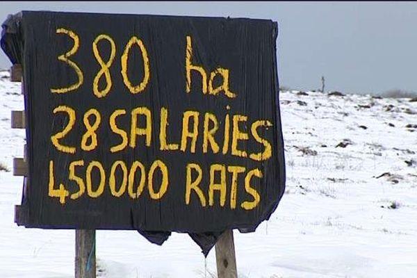 Les agriculteurs du Cantal contre les rats taupiers