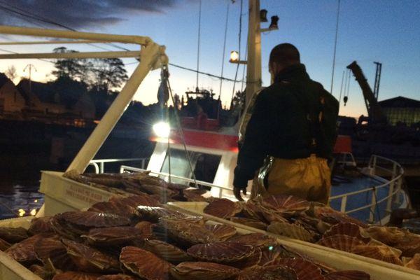 La débarque de coquilles Saint-Jacques à Port-en-Bessin ce matin.