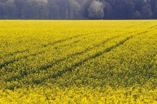 Le ministre de l'agriculture a publié l'arrêté d'interdiction du semis de semences de colza traité avec du thiametoxam en France