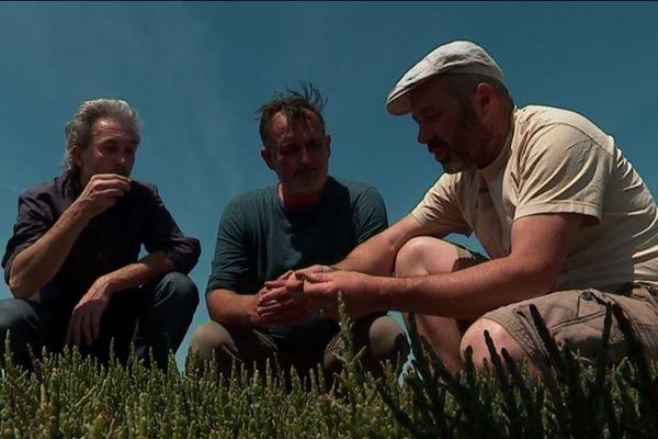 Notre journaliste Yann Salaün entouré du cuisinier Fabrice Gass et de Mathieu Bouet du Portal, producteur de salicorne sur l'île de Ré.
