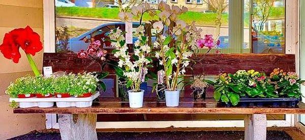 Des fleurs envoyés aux accompagnés de Forbach