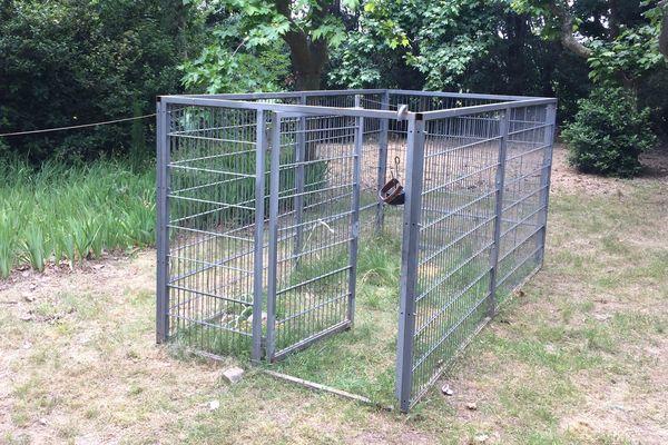 Une cage piège à sanglier à Grabels.