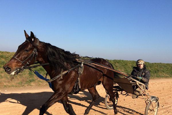 Bold Eagle à l'entraînement au Ménil-Bérard (Orne) sur la piste de l'écurie Guarato