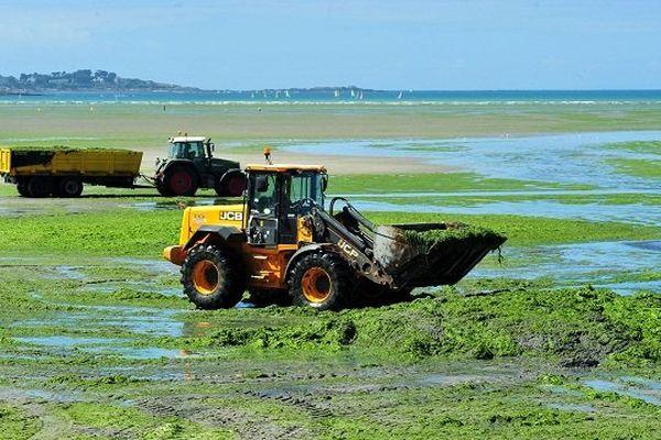 Ramassage des algues vertes sur la plage de Saint Michel en Grève.