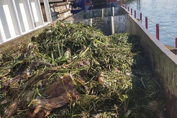 Plusieurs tonnes de poissons morts repêchées dans la Seine