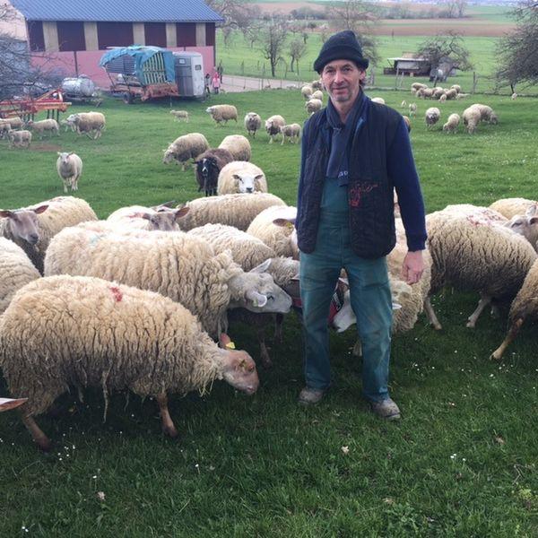 FreddyLeonhart, éleveur de brebis à Buswiller (Bas-Rhin).