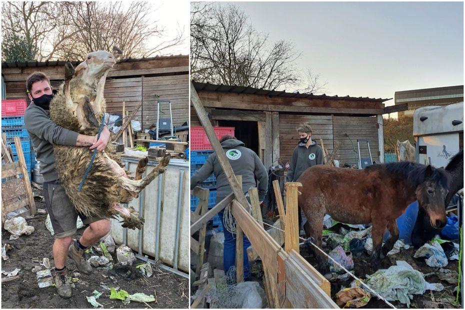 Belgique : scènes d'horreur dans une ferme, des cadavres d'animaux retrouvés
