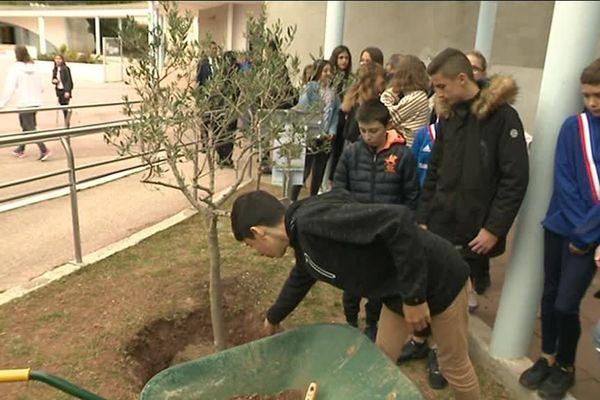 """Les élèves du collège André Malraux de La Farlède (Var) ont participé à l'opération """"Un arbre pour Ilan""""."""