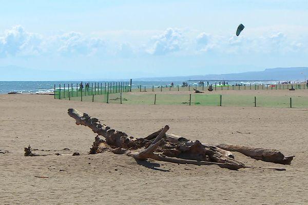 Préserver la faune et la flore du littoral, un sujet majeur à Portiragnes dans l'Hérault.