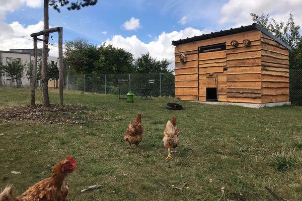 Pour l'instant, le poulailler abrite trois poules, en attendant les quatre suivantes, en septembre.