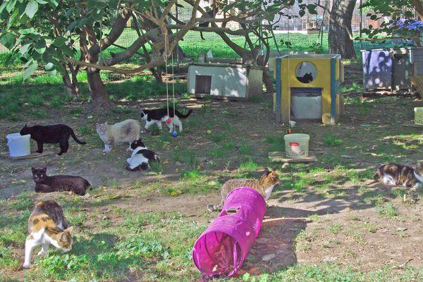 Des individus se sont introduits dans le refuge de nuit pour battre à mort les chats qui étaient dans la chatterie.