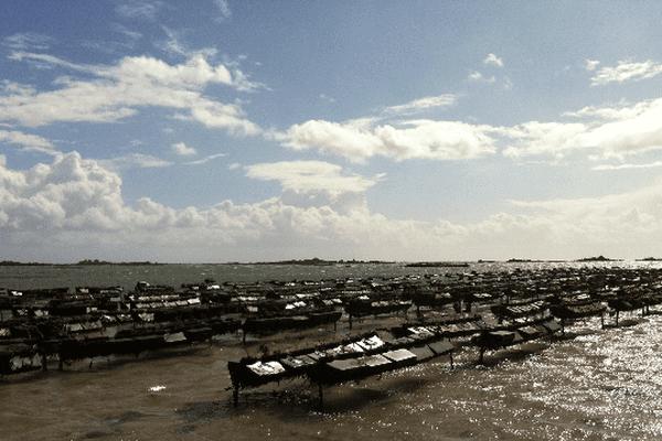 Des parcs où les huîtres poussent toute seule....