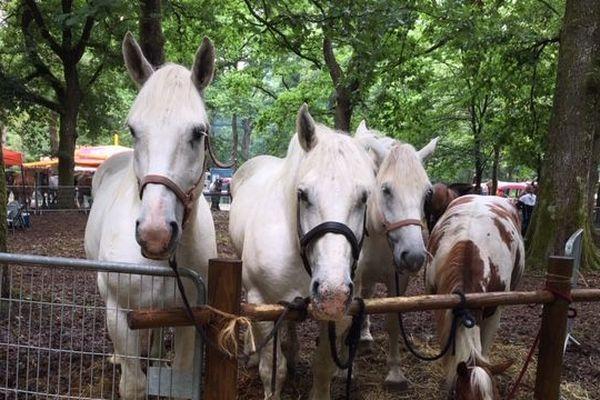 La fête du cheval de Forges-les-Eaux les 27 et 28 juillet 2019.