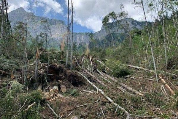 Les puissantes rafales de vent avaient déraciné de nombreux arbres dans la nuit du lundi 1er juillet en Haute-Savoie.