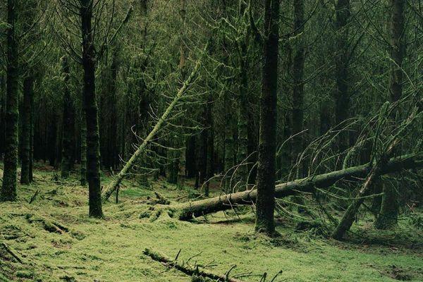Fidèle à ses origines ardennaises, Éric Guglielmi a signé deux séries cultes autour du poète Rimbaud et de la forêt ardennaise.