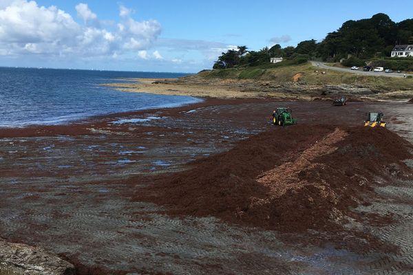 D'importants moyens sont utilisés pour nettoyer les plages, ici à Port-Maria.