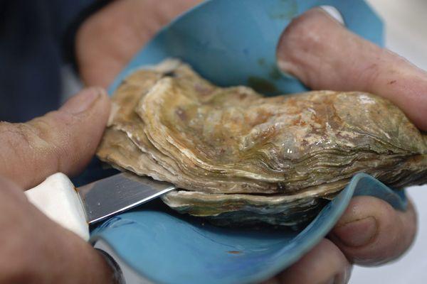A moins d'être un As de l'ouverture des huîtres, mieux vaut se protéger.