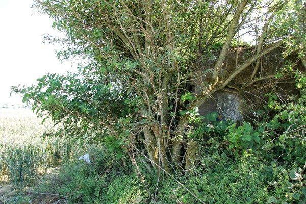 Derrière cette haie, les vestiges d'un ancien bunker de l'aérodrome de Caffiers, utilisé par les Allemands pendant la Bataille d'Angleterre.