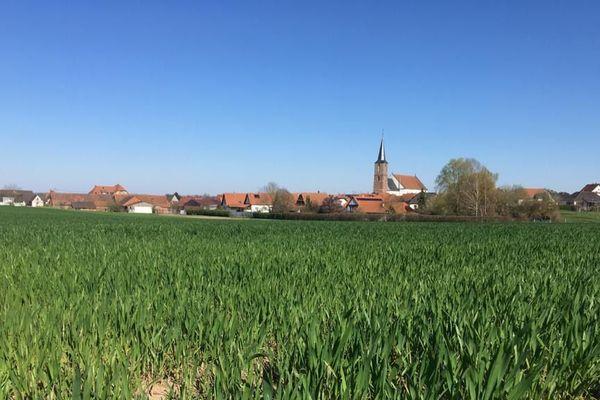 Un champs de blé à l'entrée de Schleithal (Bas-Rhin)