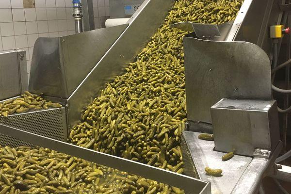 Le groupe Reitzel conditionne 40 % des cornichons indiens distribués en France dans l'usine de Bourré (41).