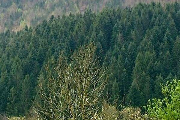 La Bourgogne est la 6e région française la plus boisée.