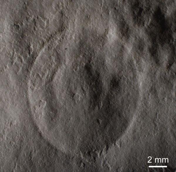 Des organismes fossilisés vieux de 600 millions d'années