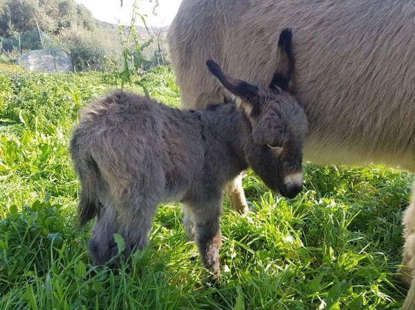 Cette année, l'élevage d'Olivier Fondacci a enregistré 20 naissances.
