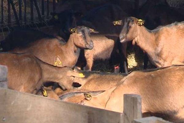 Patrice et Fabienne Machet ont changé de vie, ils viennent de créer une chèvrerie