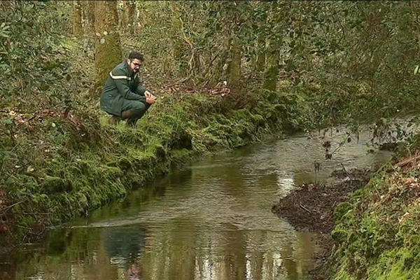 Ce chargé de projet environnement  de l'ONF suit l'évolution de la biodiversité dans ce cours d'eau en forêt du Gâvre