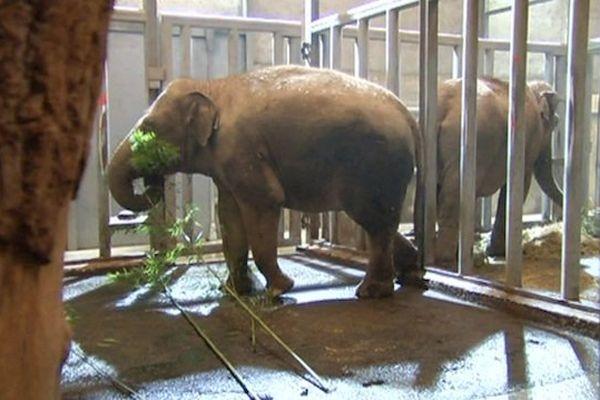 Des éléphant du Zoo de Pont-Scorff (56)