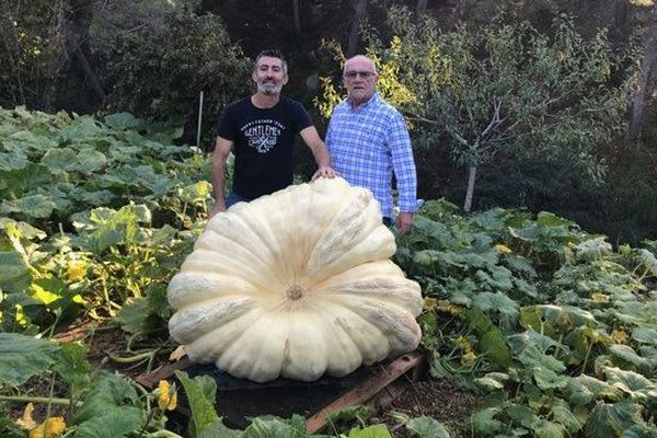 Une courge géante de plus de 300 kg, dans le jardin de Jean-Pierre Canavese (à droite), à La Ciotat. Une création de Christian Vanetti (à gauche).