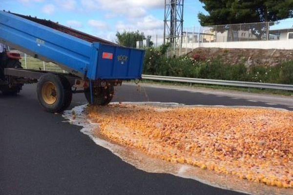 La petite centaine d'agriculteurs ont déversé des produits agricoles au rond point de l'entrée du marché au gros de fruits et légumes.