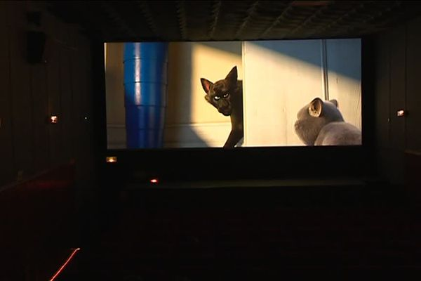 Après quatre mois d'écran noir, retour des projections au cinéma Sejefy's de Saint-Sulpice, dans le Tarn.