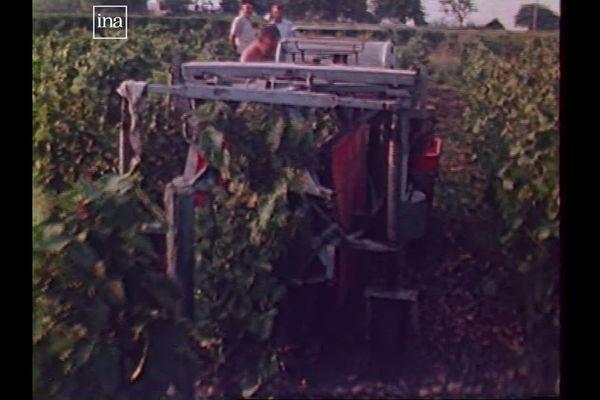 Première machine à vendanger, bricolée par un agriculteur, dans le Beaujolais (1982)