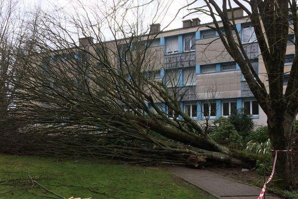 L'arbre tombé à cause des rafales, sous lequel s'est retrouvé trois élèves du lycée Paul Sérusier à Carhaix (29)