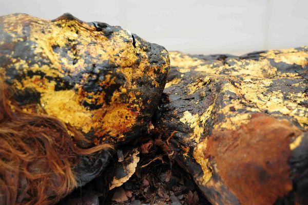 La momie dorée Ounnout serait âgée de plus de 1700 ans.