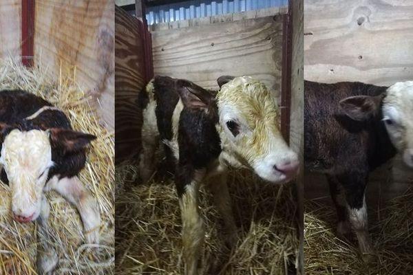 Les trois nouveaux nés cherchent leur prénom.
