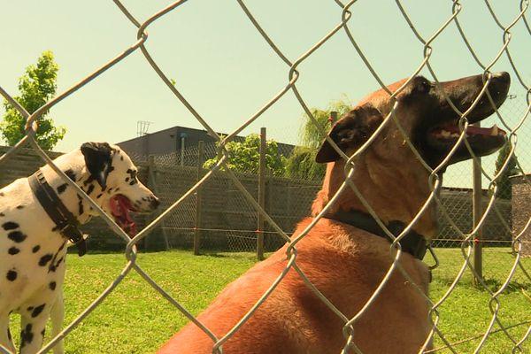 """Le dresseur prend bien garde à placer dans le même espace des chiens """"compatibles"""""""