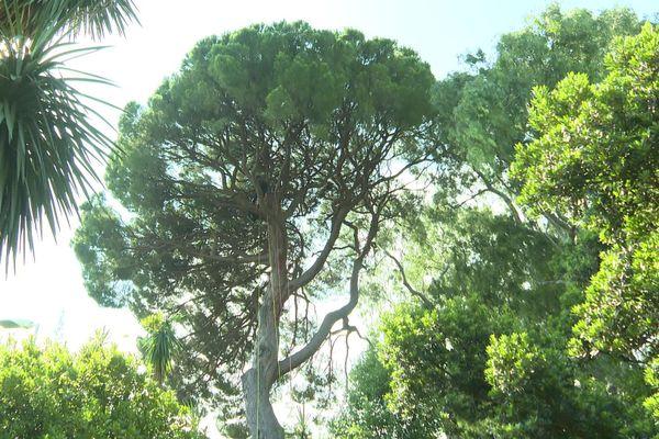Ces arbres ont plus de 100 ans.