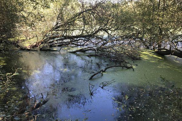 Certains saules en bordure d'étang empiètent sur l'eau, moins bien pour la pêche, mais mieux pour la biodiversité