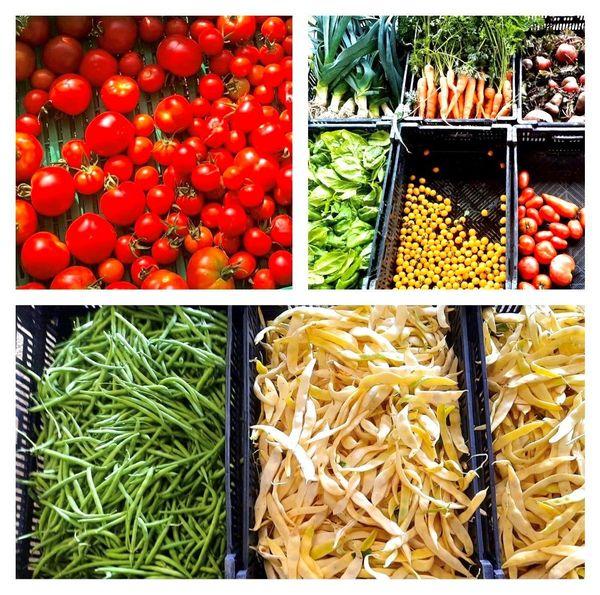Légumes bio produits pour la cantine du village