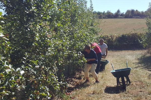 Les cueilleurs de pommes étaient nombreux dimanche 16 septembre 2018 à Saint-Agnant-de-Versillat