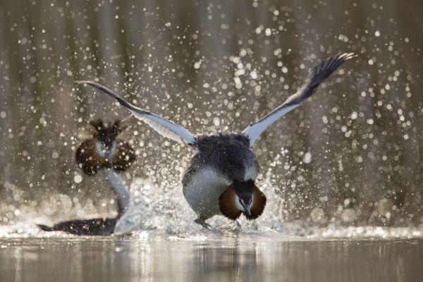 Festival de l'Oiseau et de la Nature - 1ER PRIX CONCOURS PHOTO LES OISEAUX AMOUREUX