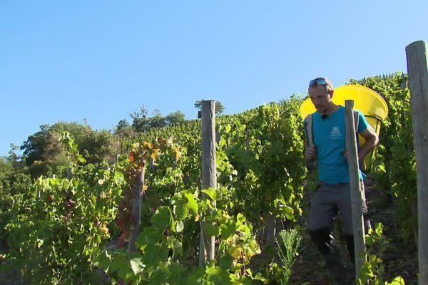"""Fabien Fosse fait partie de ces """"élus à la terre"""" à Gervans, dans la Drôme. Il fait, cette année, sa première récolte sur parcelle. Plus d'un hectare en appellation Crozes-Hermitage, que ce viticulteur loue à la cave coopérative de tain l'Hermitage (Drôme)."""