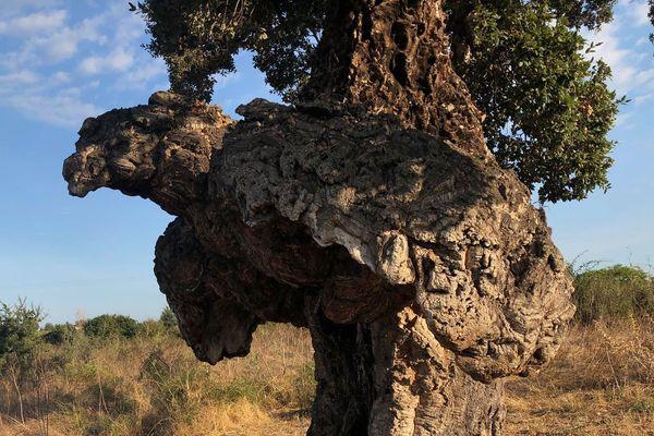 L'Arburacellu, l'arbre oiseau, est en compétition pour le titre de l'arbre européen de l'année 2019.
