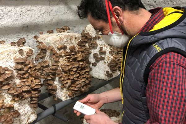 Depuis décembre 2020, Tristan et Frédéric ont investi des caves de Riom, près de Clermont-Ferrand, pour faire pousser des champignons japonais.