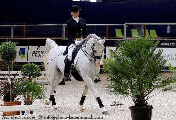 Le cheval arabe est polyvalent. Ses performances en endurance ne font pas oublier ses qualités en dressage