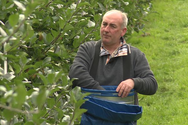 Jean-Charles Level, arboriculteur dans ses vergers à Peuplingues